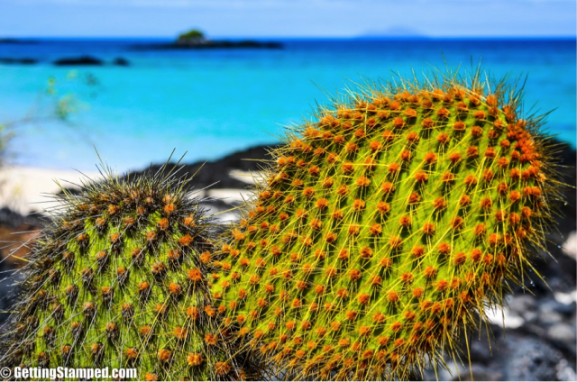 cruising with ecoventura in the galapagos islands