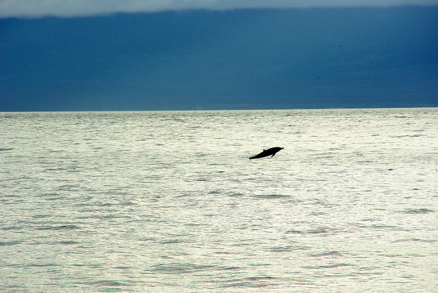 dolphin sighting in the galapagos islands with Ecoventura
