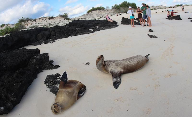 Galapagos Islands, Sea Lions on Beach, San Cristobal