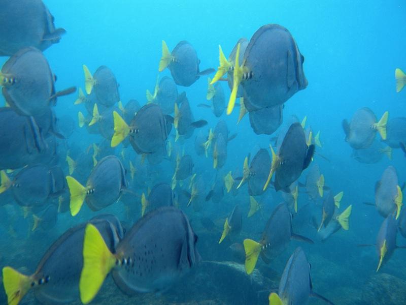 tropical fish - david noyes