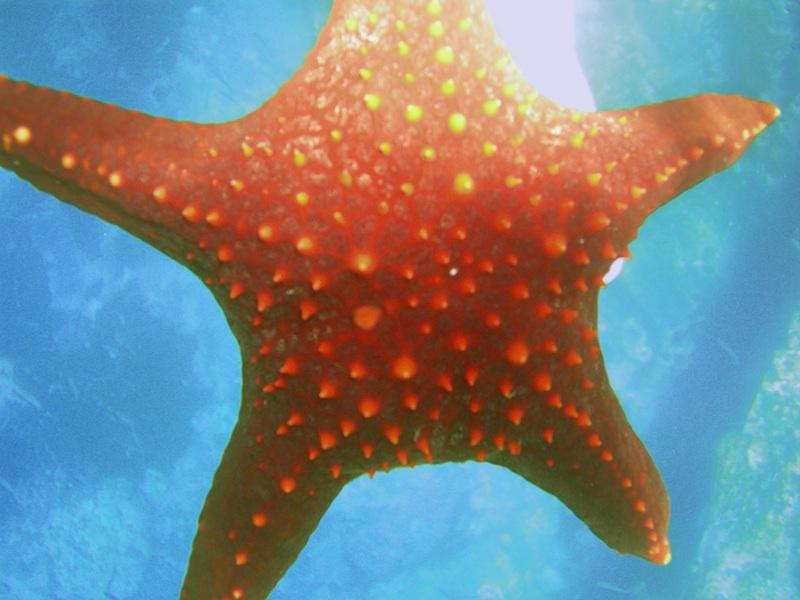 starfish - david noyes