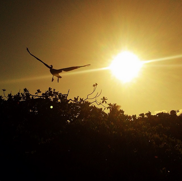Screen Shot 2014-03-19 at 9.33.41 AM