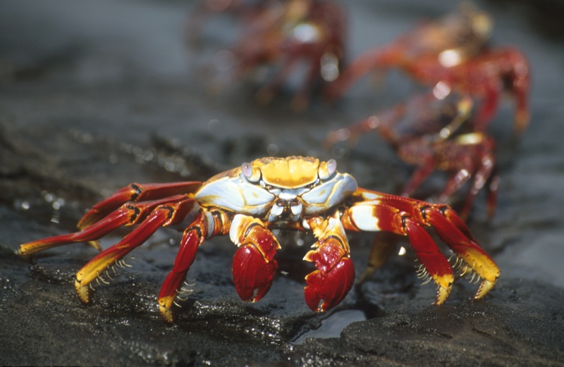 up close encounters with galapagos islands