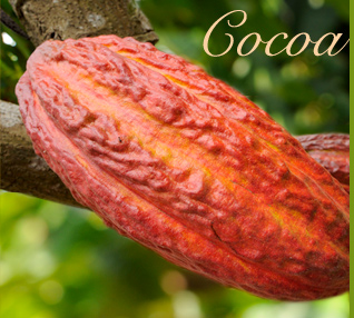 cacao-hacienda